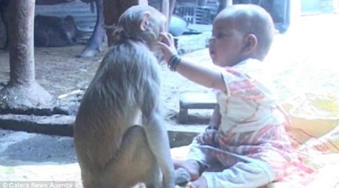 Heboh Ada Monyet Bermain dengan Bayi di India