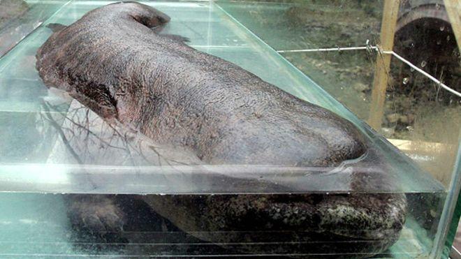 Kepala Polisi China Dipecat Lantaran Makan Ikan Langka