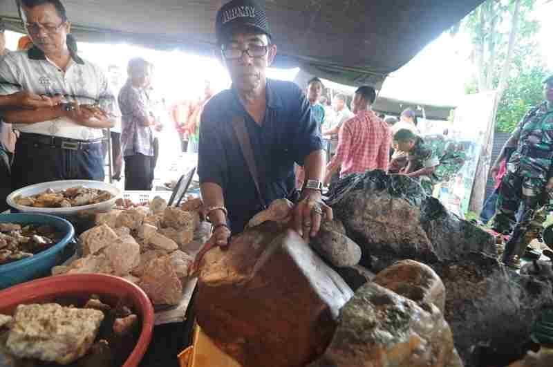 Batu Lumut Merah Sungai Dareh Tembus Harga 300 Juta