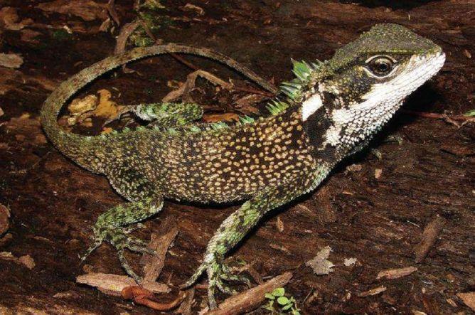 Tiga Spesies Baru 'Godzilla Mini' Ditemukan