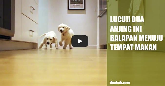 Video Lucu tentang Anjing Berlari