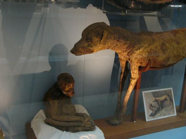 Hampir 8 Juta Mumi Anjing Ditemukan Di Situs Mesir Kuno