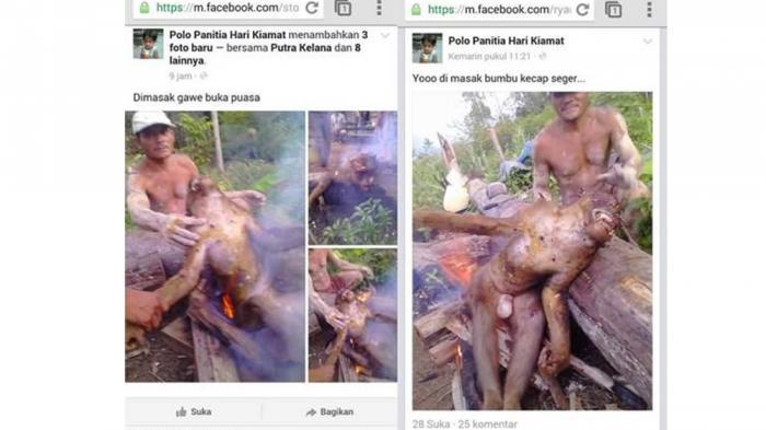 bakar orangutan