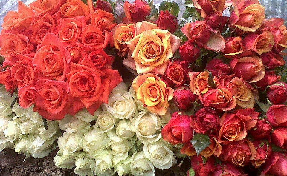 toko-bunga-cantik