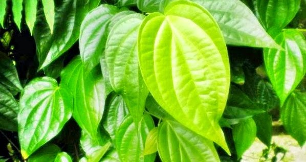 7 Cara Alami Tuk Mengatasi Keputihan Secara Efektif 6