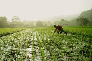 Memperingati hari pangan sedunia